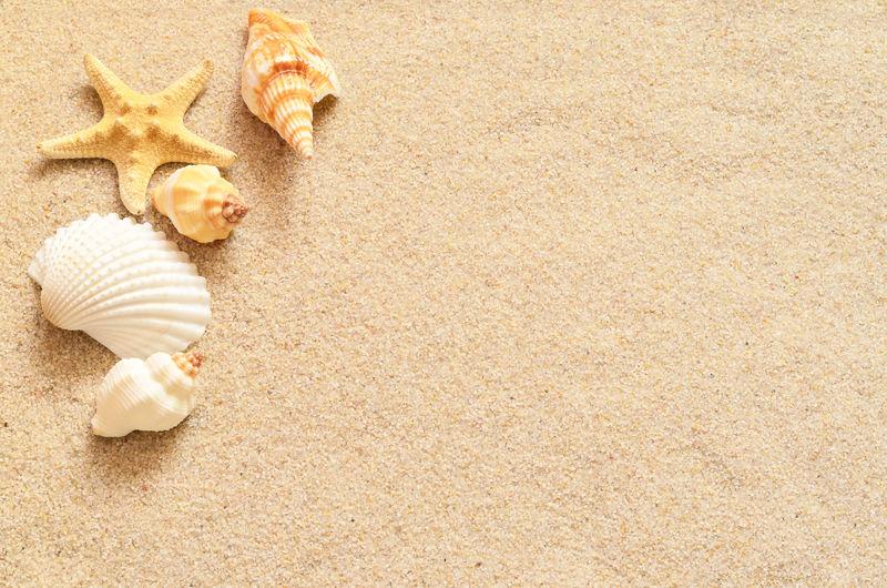 沙子上的贝壳