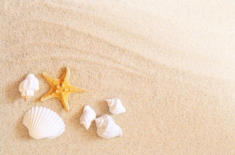 海滨夏日海星