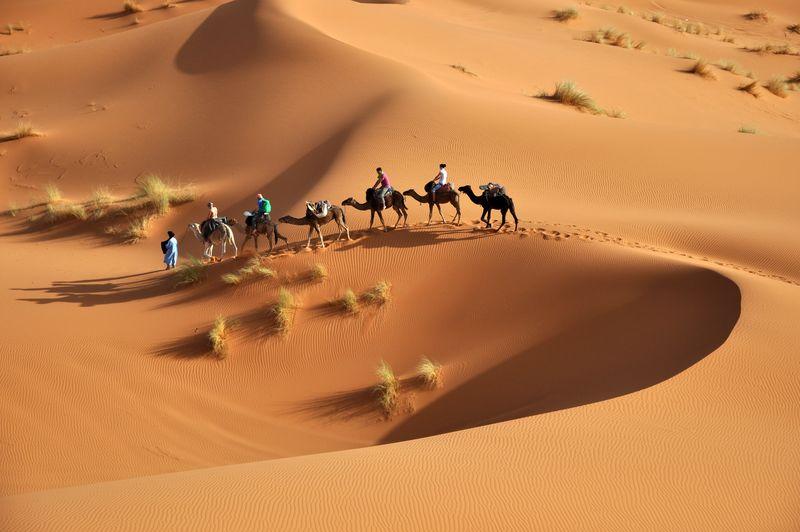 摩洛哥-Merzuga-2018年6月31日/骆驼车队穿过撒哈拉沙漠的沙丘-摩洛哥Merzuga