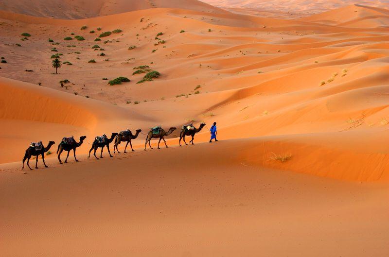 驼队穿越撒哈拉沙丘-摩洛哥