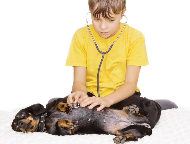 扮演兽医的男孩-对宠物的照顾和关心
