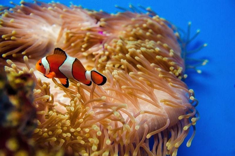 深蓝色海洋中的珊瑚
