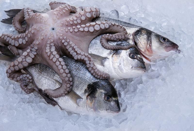 冰上新鲜海鲜