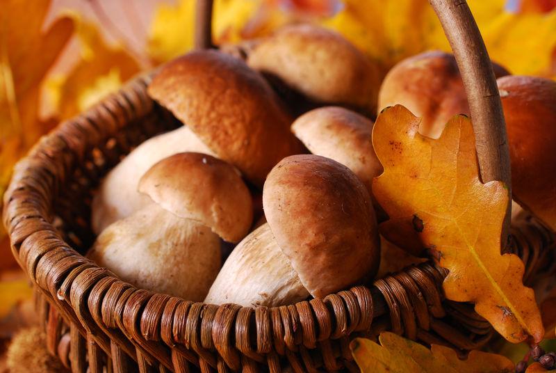 篮子里有新鲜的西普蘑菇。背景,真菌。