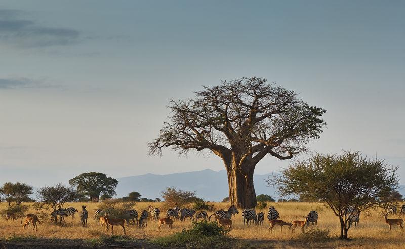 非洲动物景观