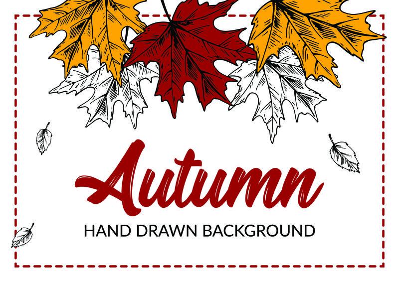 用彩色枫叶手工绘制的秋天背景。地平线