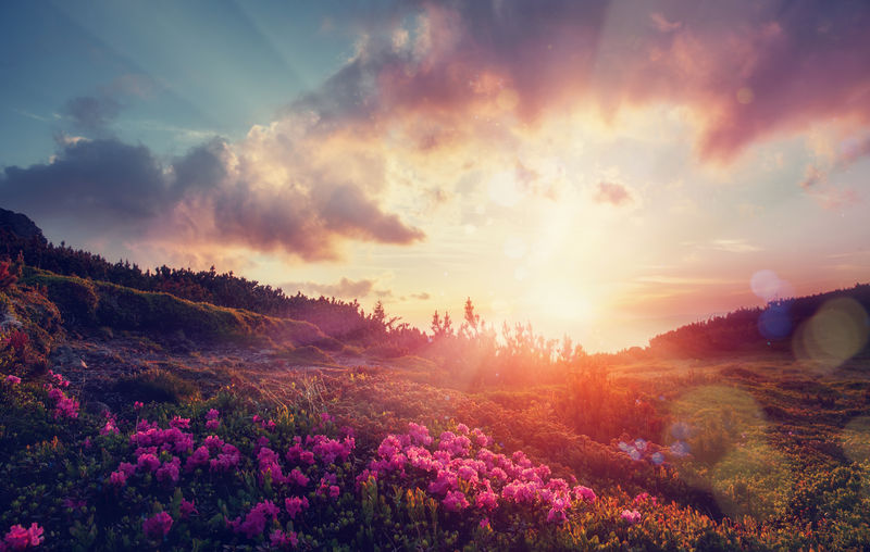 日落时神奇的高山高地。在阳光的照射下,傍晚的山上开着令人惊叹的粉红色杜鹃花。戏剧性的天空,五彩缤纷的乌云笼罩着群山。不可思议的自然背景