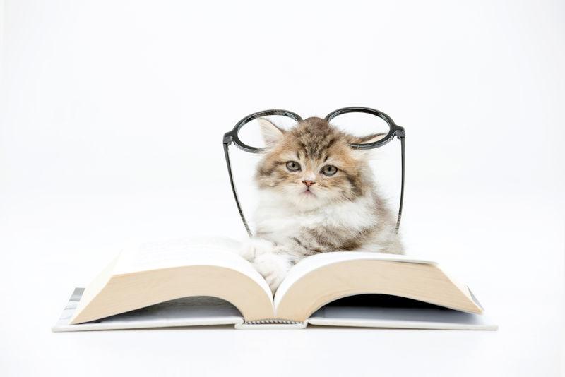 一只波斯小猫在读一本关于孤独的书