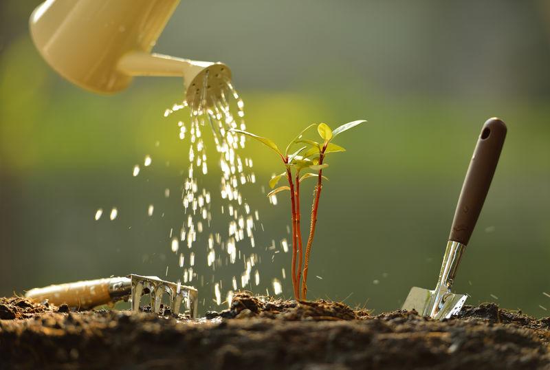 用水壶浇水的芽