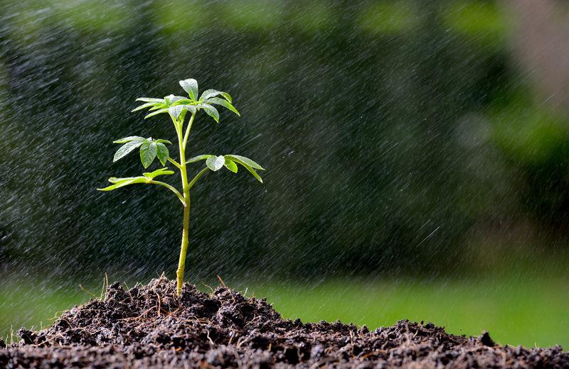 雨中生长在地上的绿色幼苗