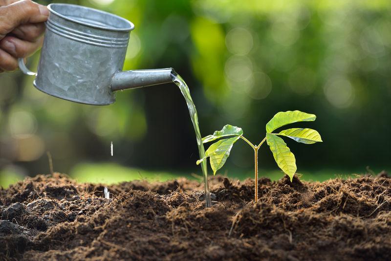 从水壶里浇水的小植物