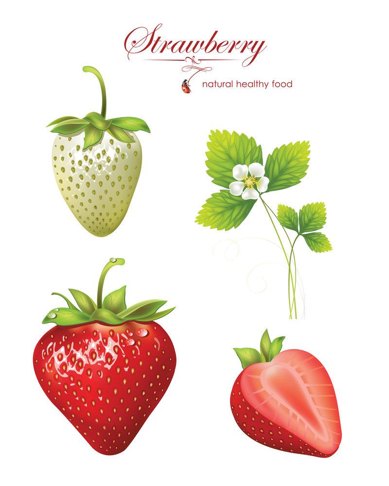 漂亮的草莓-真实感的矢量图示