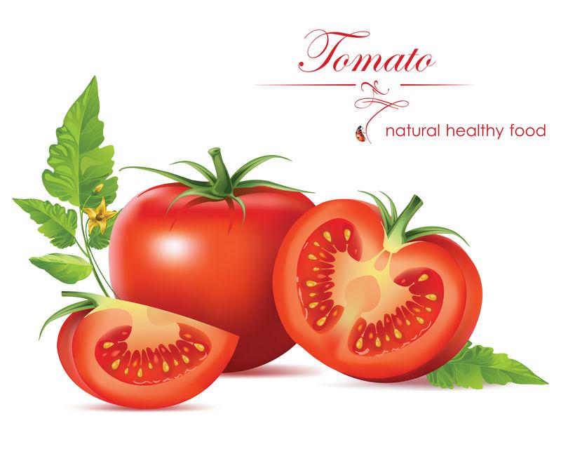 漂亮逼真的西红柿-矢量图解
