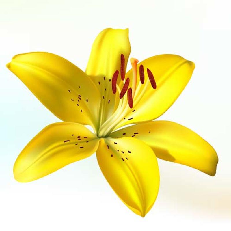 矢量花朵设计