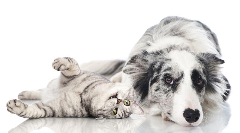 白色背景上的狗狗猫咪