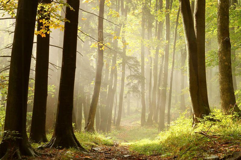 通往山顶的秋林小径