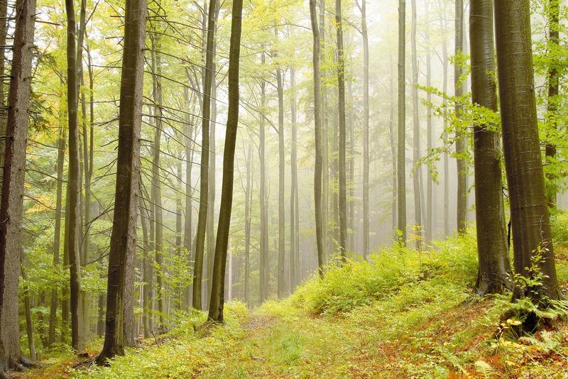 在一个雾蒙蒙的早晨穿过秋林的小路