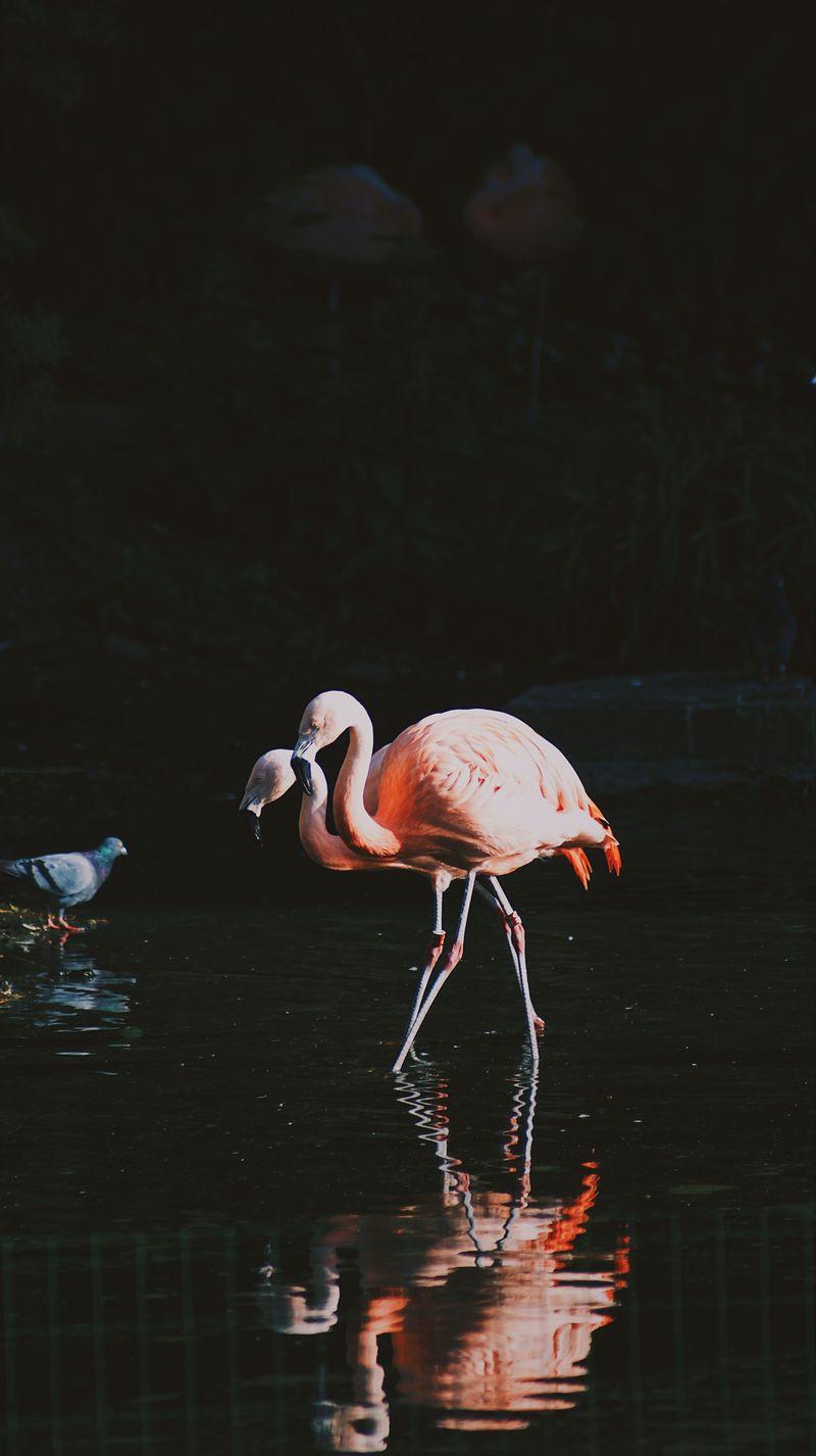 动物火烈鸟