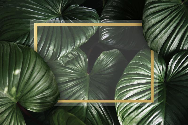 矢量植物叶片背景