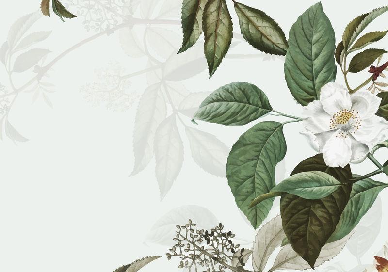 复古植物框架设计矢量