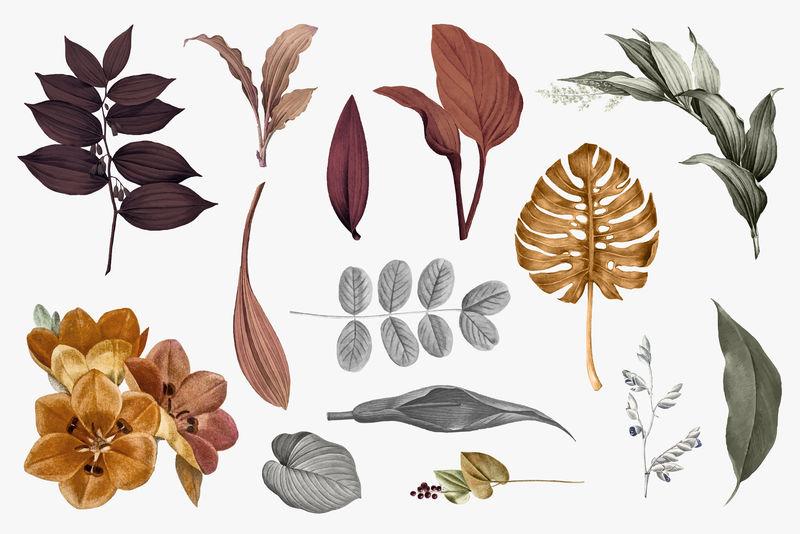 热带树叶采集向量集