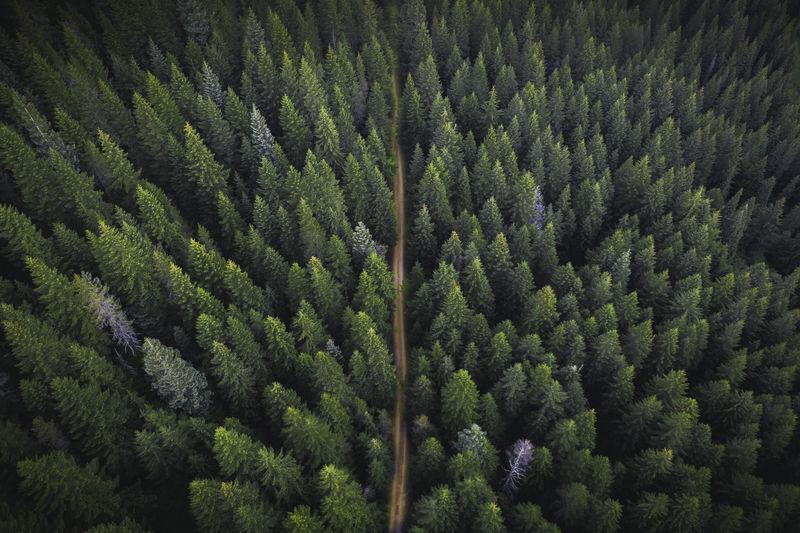 绿色森林和土路的无人机视图