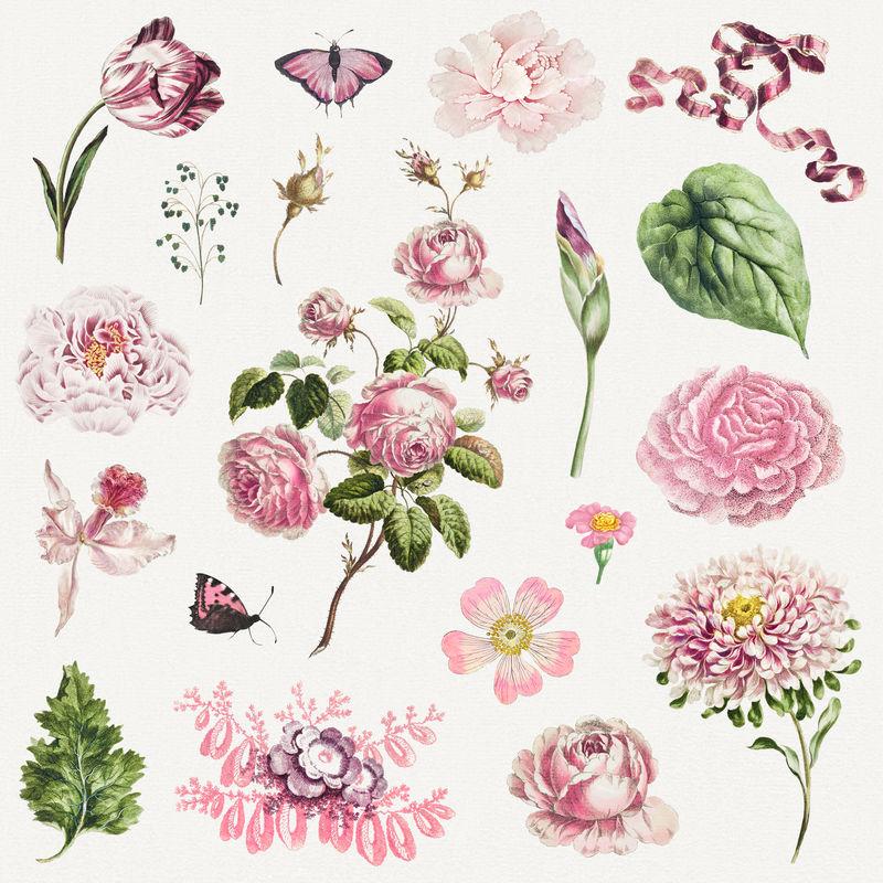 复古植物插图套装