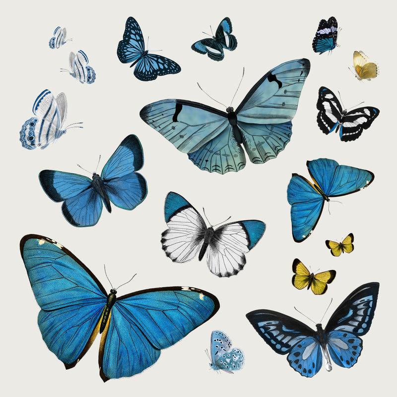 复古常见蓝色蝴蝶插图设计元素集