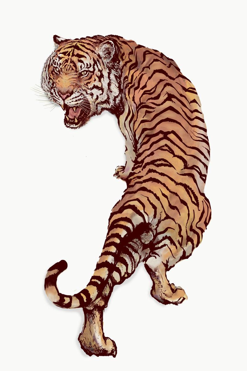 灰白色背景上的手绘咆哮虎插图