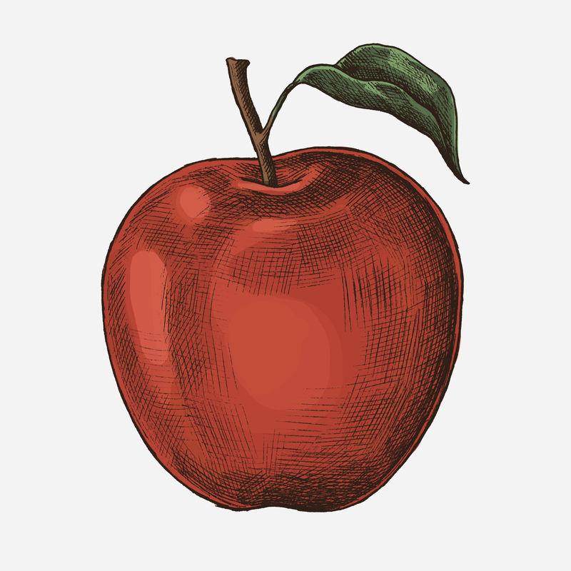 鲜熟红苹果插画