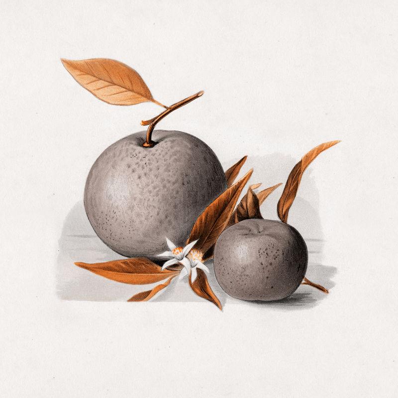 Oranges复古墙画印刷海报设计混搭原创艺术作品