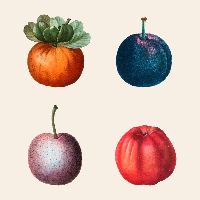 复古水果矢量集手绘插图