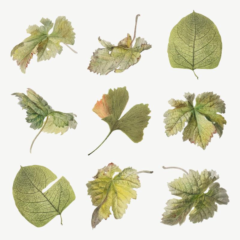 复古叶植物插图矢量集