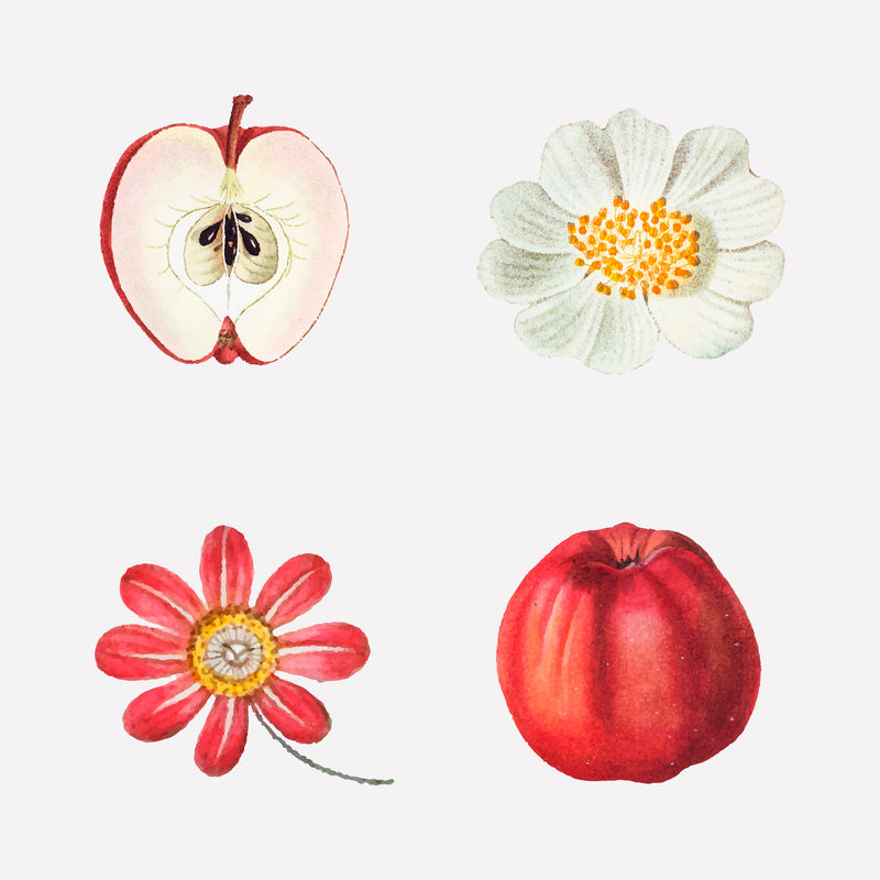 水果和花卉矢量复古套装手绘插图