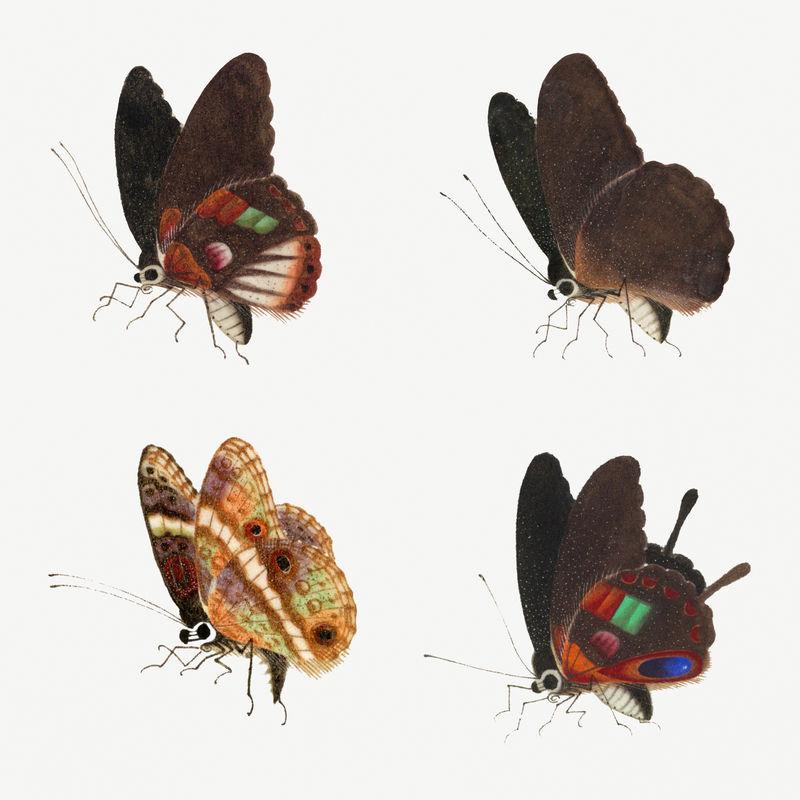 Psd蝴蝶昆虫复古插图集