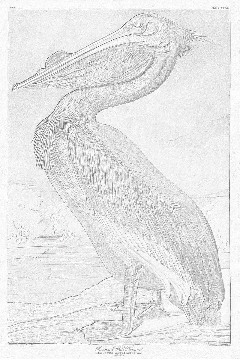美国白鹈鹕复古插图矢量从原来的阿沃克混音