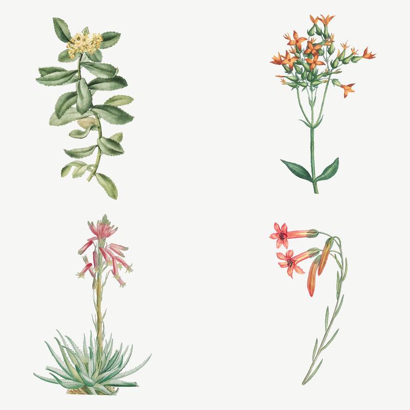 复古仙人掌和多汁植物插图集