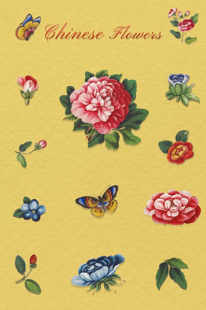 美丽的古董中国花卉插图设置模型