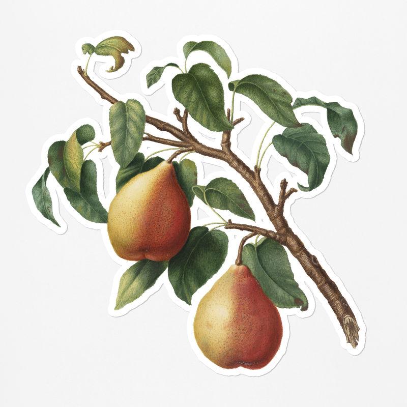 手绘白边野梨果贴纸