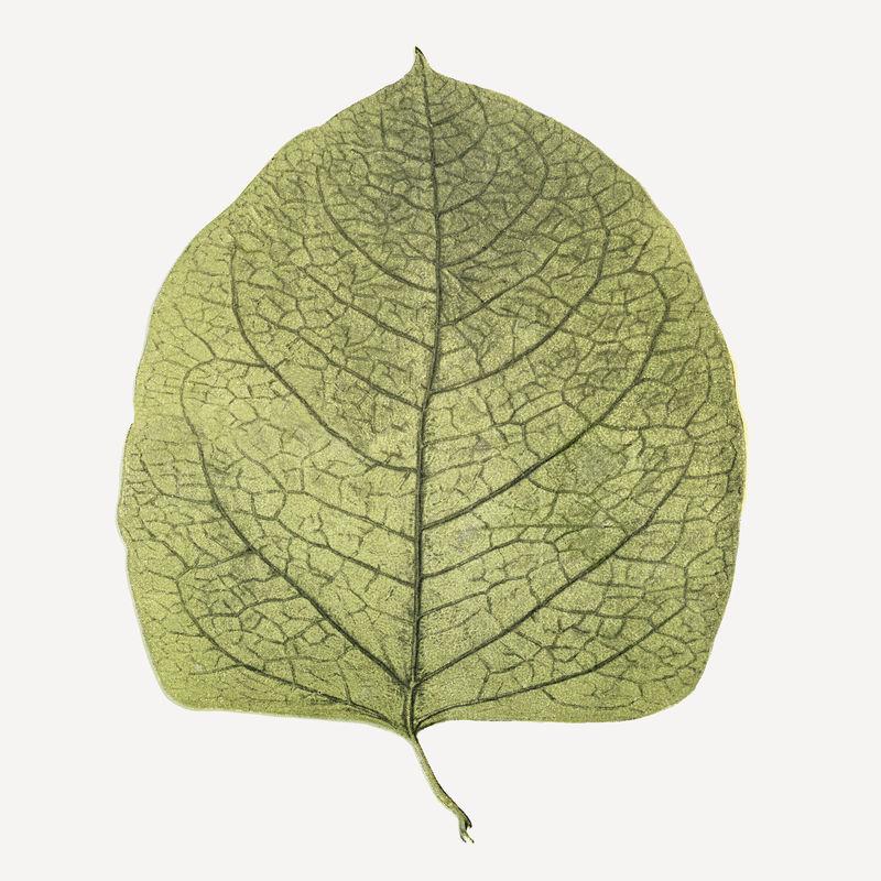 复古叶植物插图psd混合从韦尔塔尔和人类书