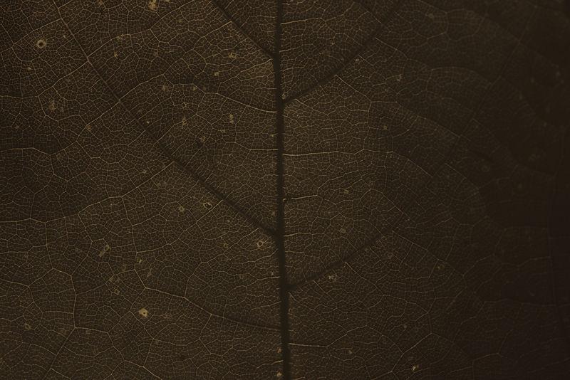 深棕色叶子图案纹理背景