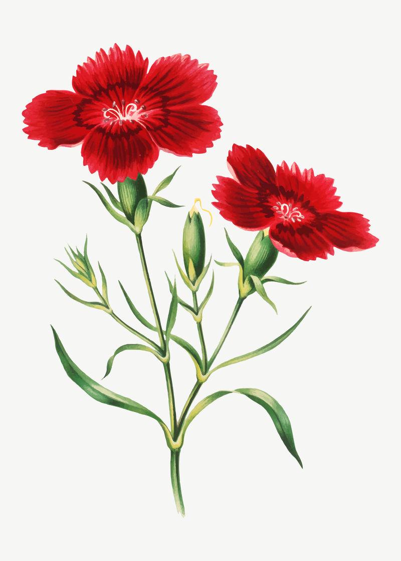 复古红花插图矢量由Currier的艺术作品混合而成\u0026amp;艾夫斯