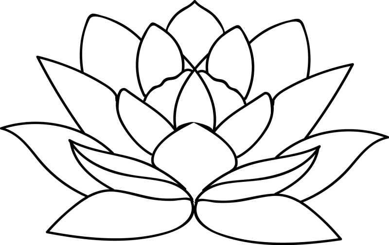 白色背景上的矢量线条莲花插画