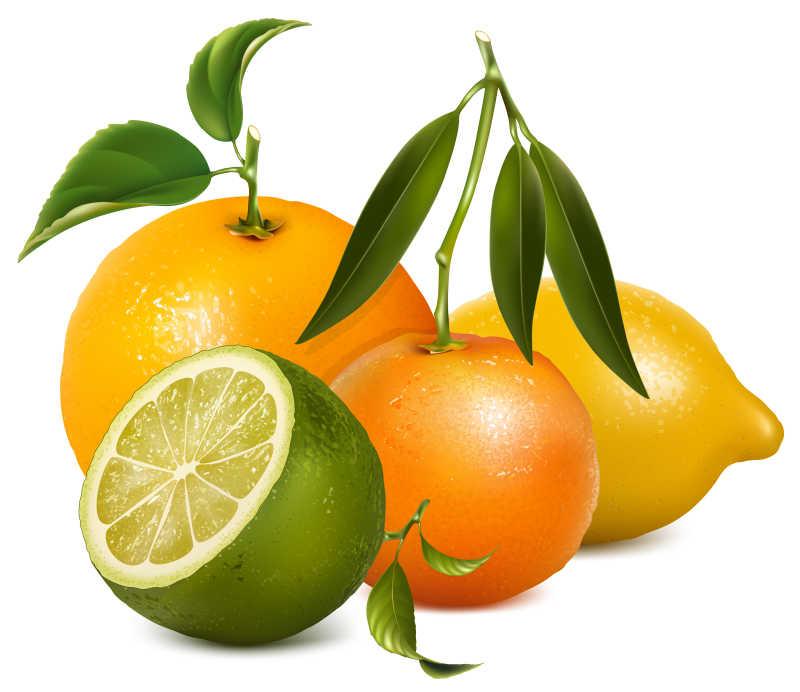 矢量的柑桔类水果背景