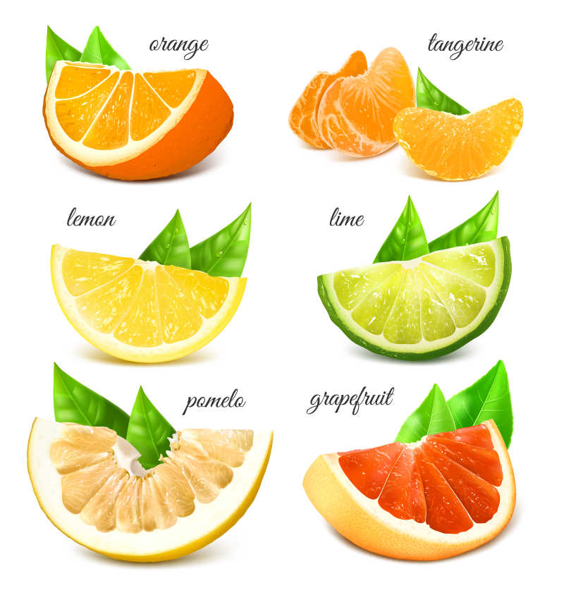 矢量新鲜柑橘类水果插图