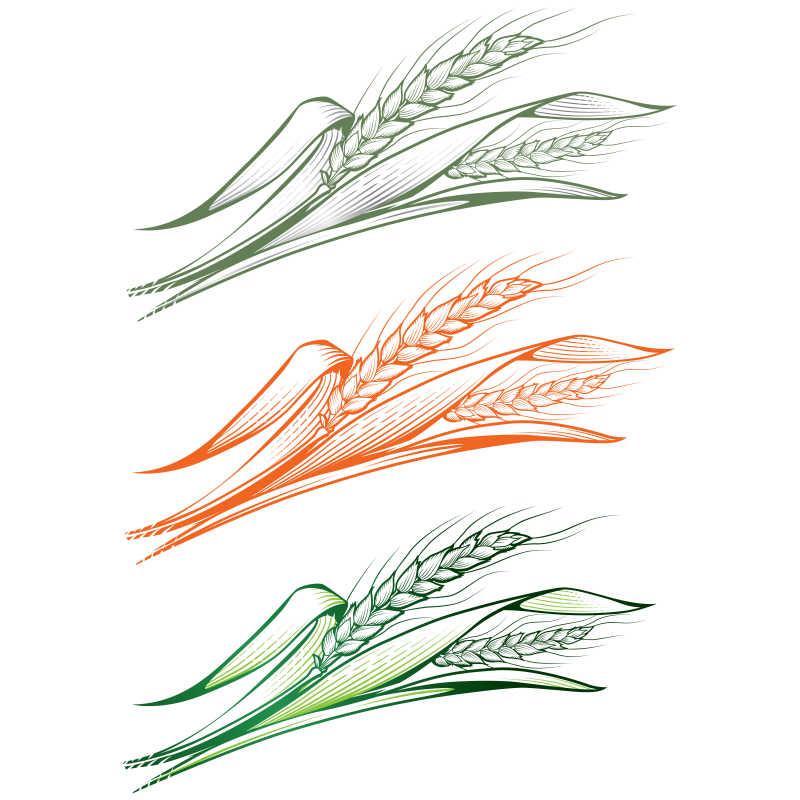 彩色的麦穗矢量插画