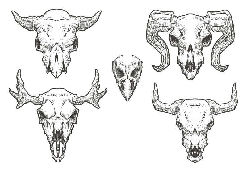 不同动物的矢量头骨