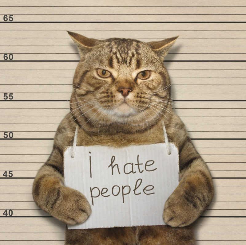 浅黄色背景下被逮捕的猫举着写着字的纸板