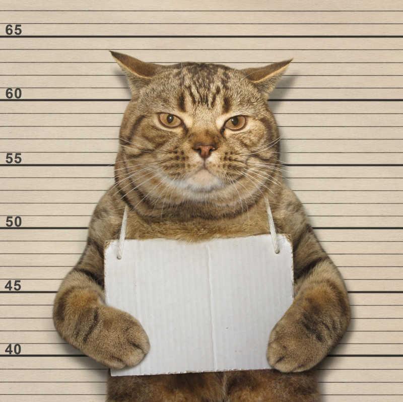 犯错被捕的猫