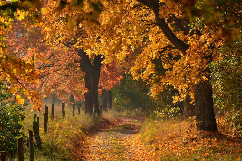 葫芦瓜叶子图片_秋季木桌上的南瓜图片-秋季落满黄叶的木桌上的南瓜素材-高清 ...